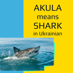 """Graphic featuring an image of a shark with the words """"Akula means shark in Ukrainian"""" on a yellow background."""